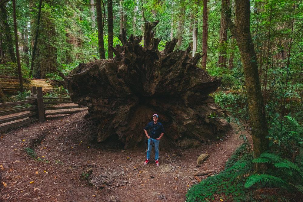 Redwoods Gregory Nolan