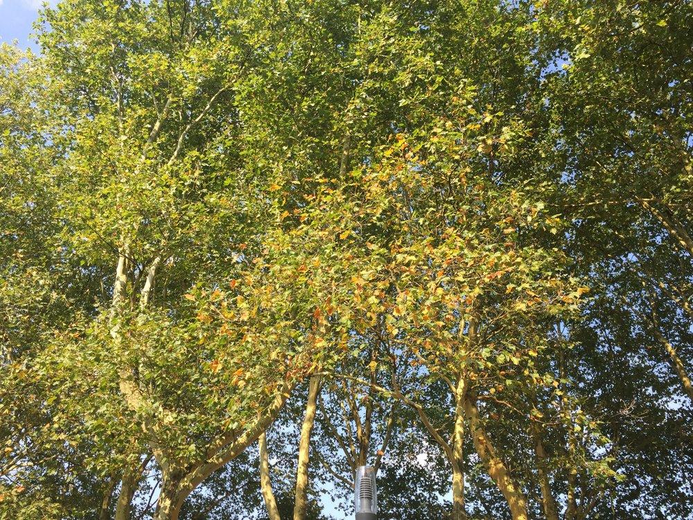 Verdorde bladeren, M. Snoek (aug. '18)