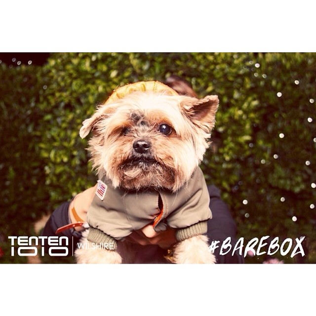 Busby brought the heat in the #BareBox the other night on the roof of the @TenTenWilshire #fashion #yorkie