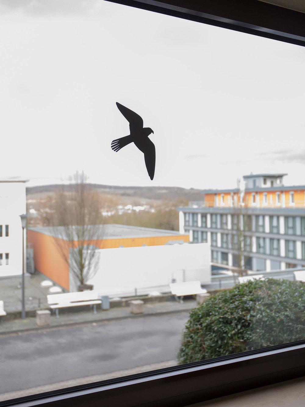 shschroeder-buschmann-vogel.jpg