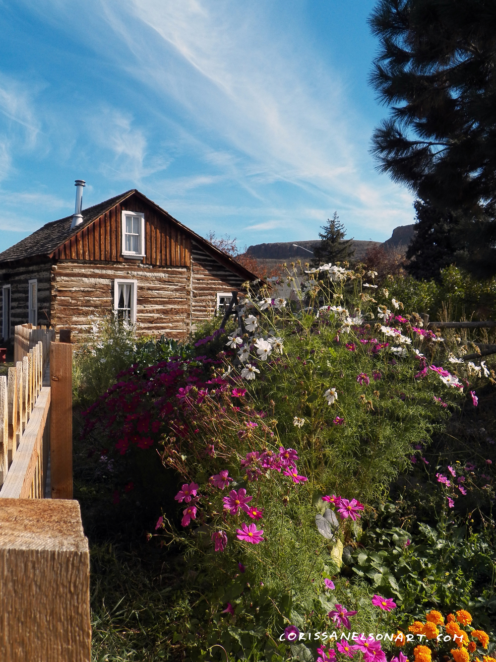 cosmo flowers and cabin in golden colorado