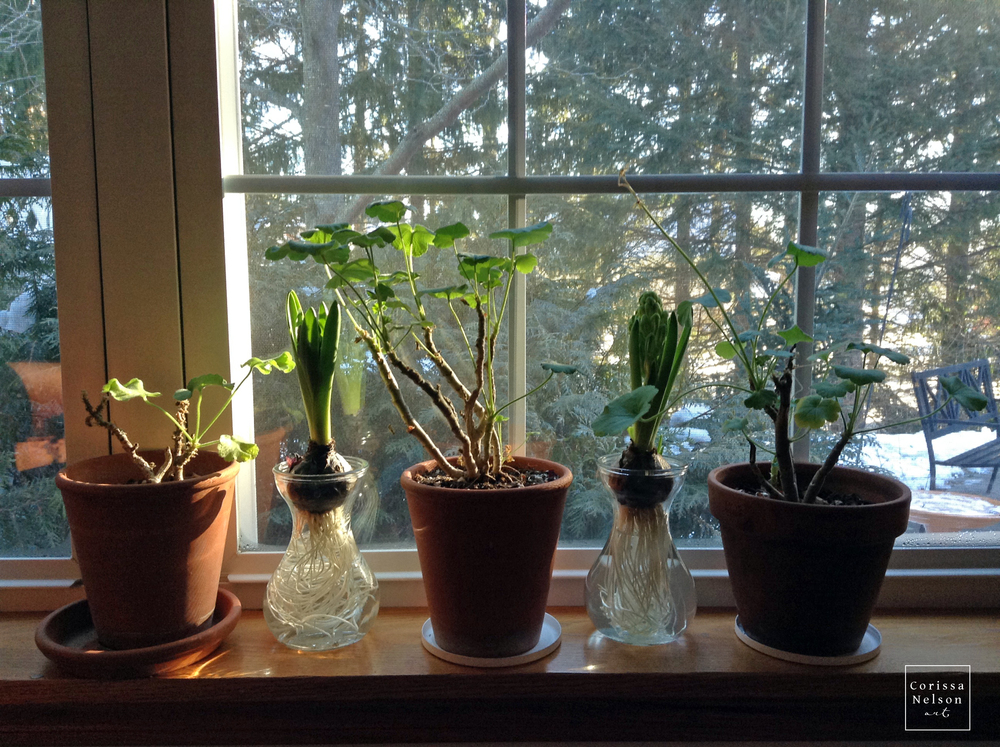 window sill plants