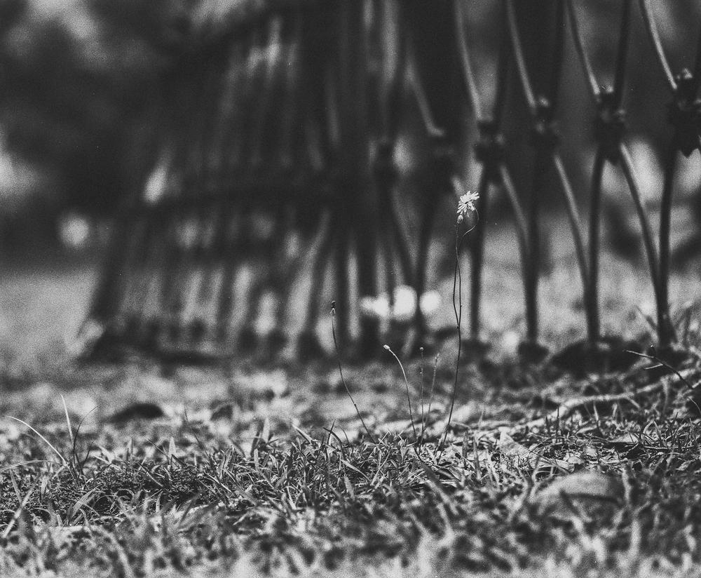 cemetery-2.jpg