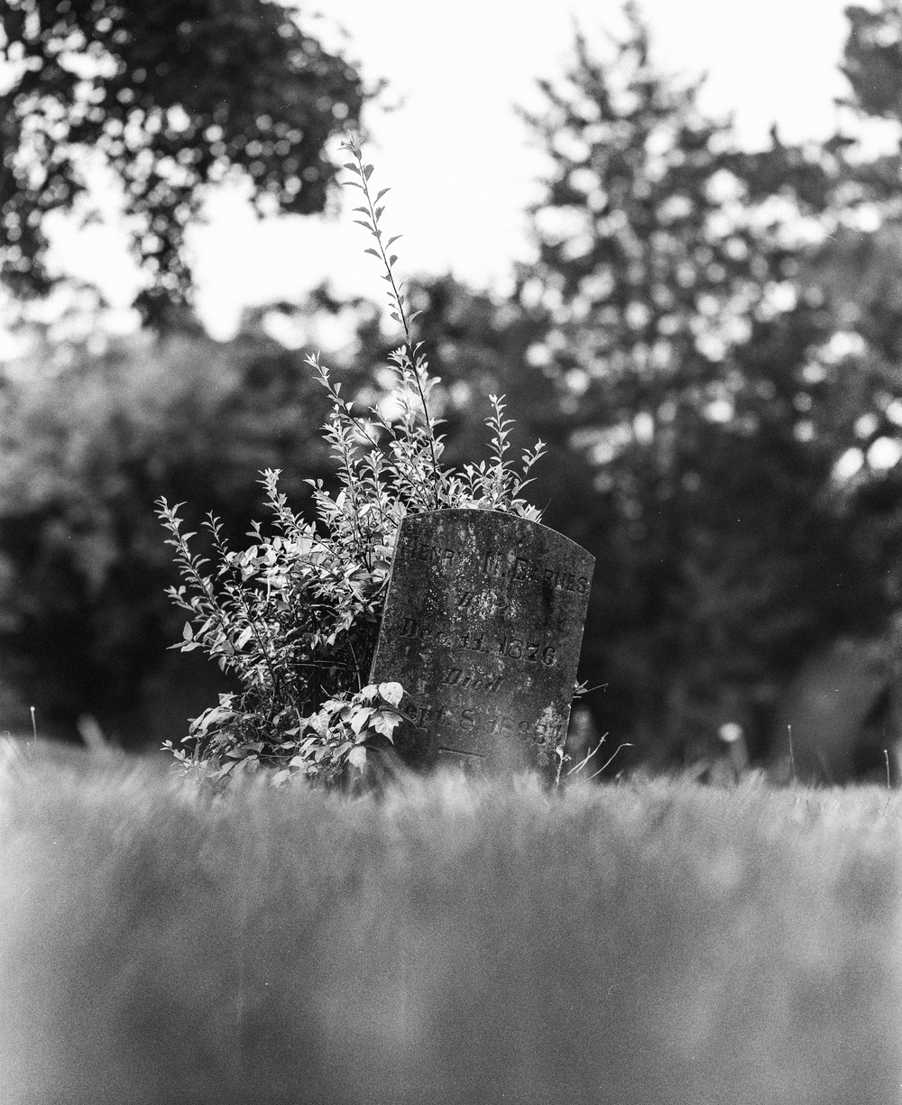 cemetery-4.jpg