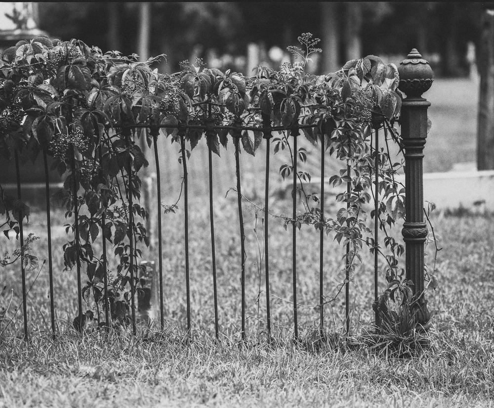 cemetery-8.jpg