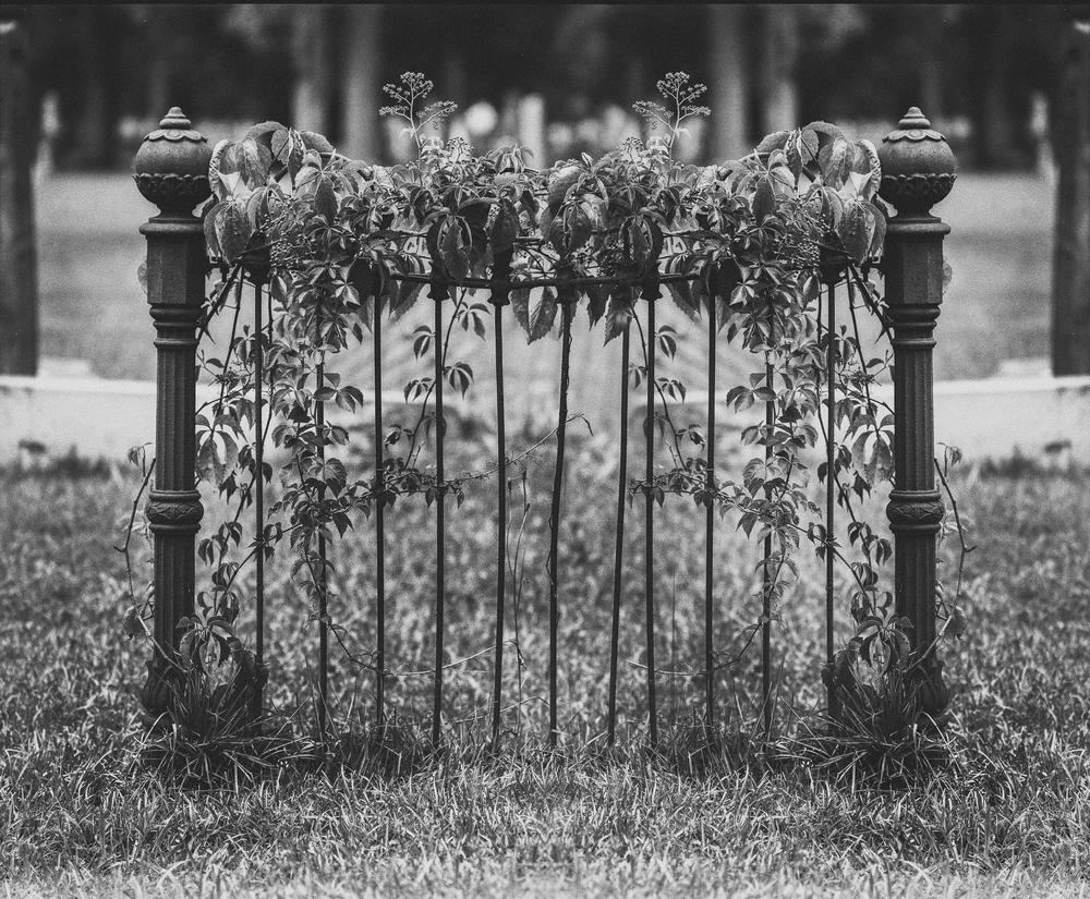 cemetery-9.jpg