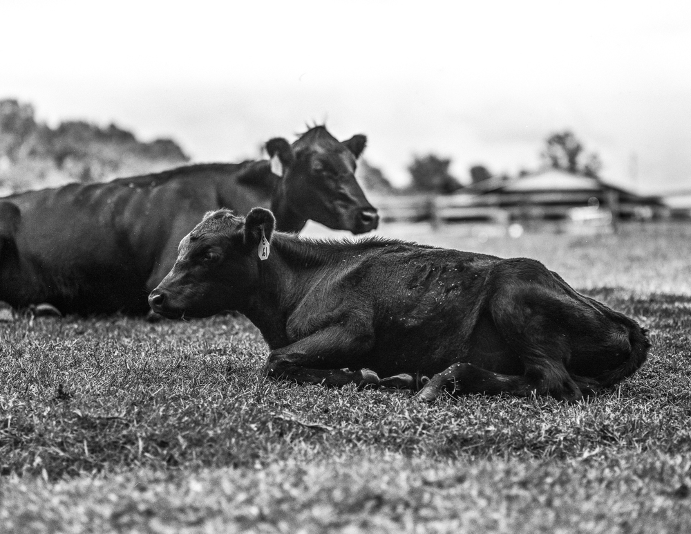 Gilis farm-5.jpg