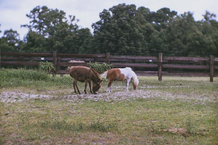 little horses -04827.jpg