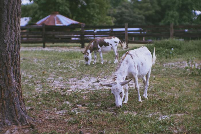 little horses -04831.jpg