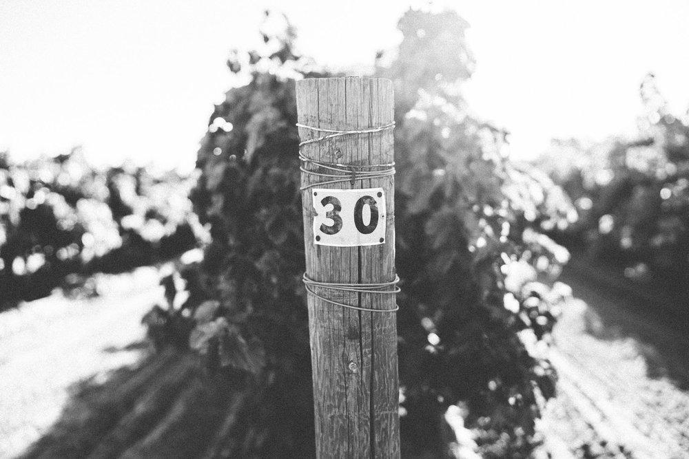 DSC09137.jpg