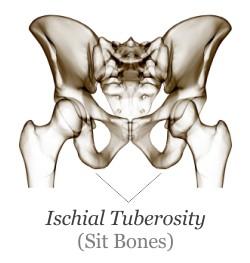 ischial-tuberosity.jpg