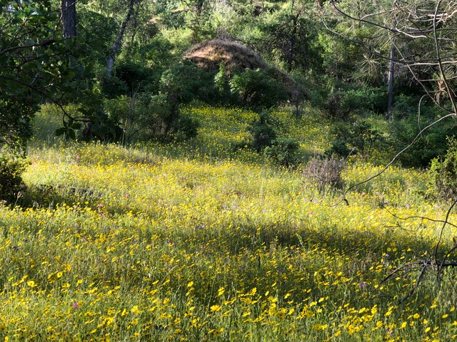 """A short hike in Richardson Springs kind of looked """"super bloomy."""""""