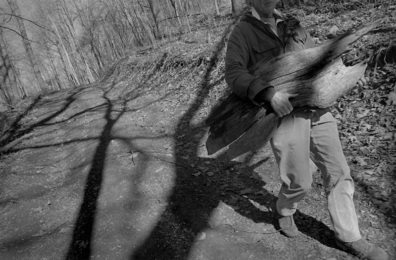 Sam Gray carrying chestnut stump from the woods, Buckner Gap
