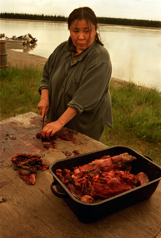Athabascan Woman Butchering Beaver, Old Minto, Alaska  - for the Rural School and Community Trust