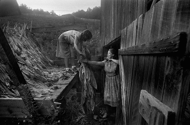 Angie and Juanita Shelton Unloading Tobacco, Hopewell, NC – from Sodom Laurel Album