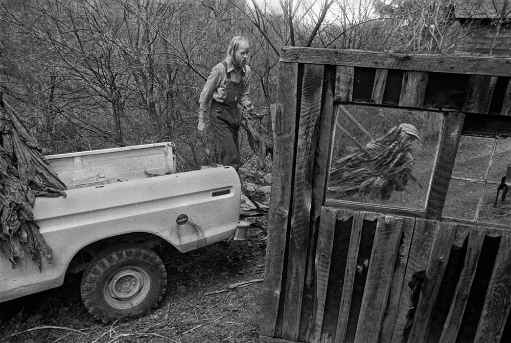 Jeff Johnson and John Henderson Moving Tobacco to the Casing House, Big Pine, Madison County, NC, 1978