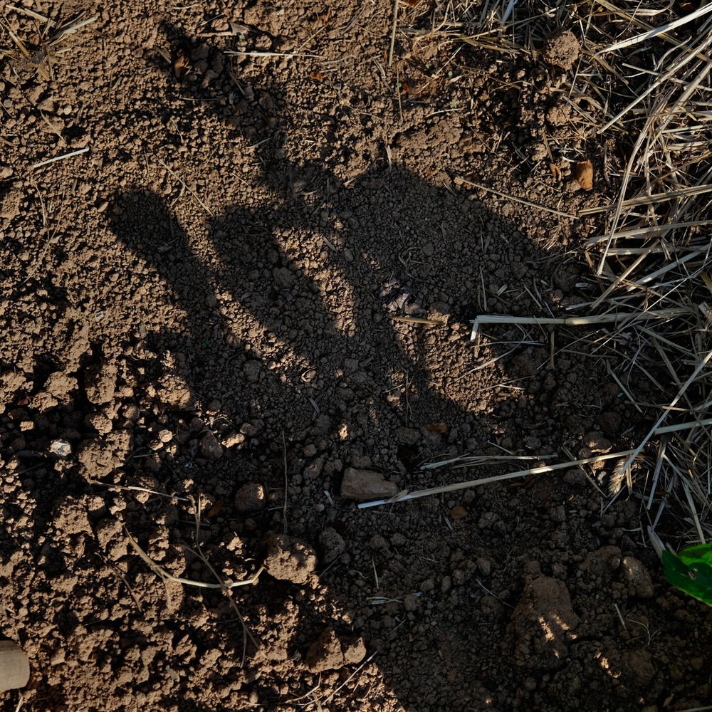 Dirt in our Garden with Potato Plant Shadows, PawPaw, 2014