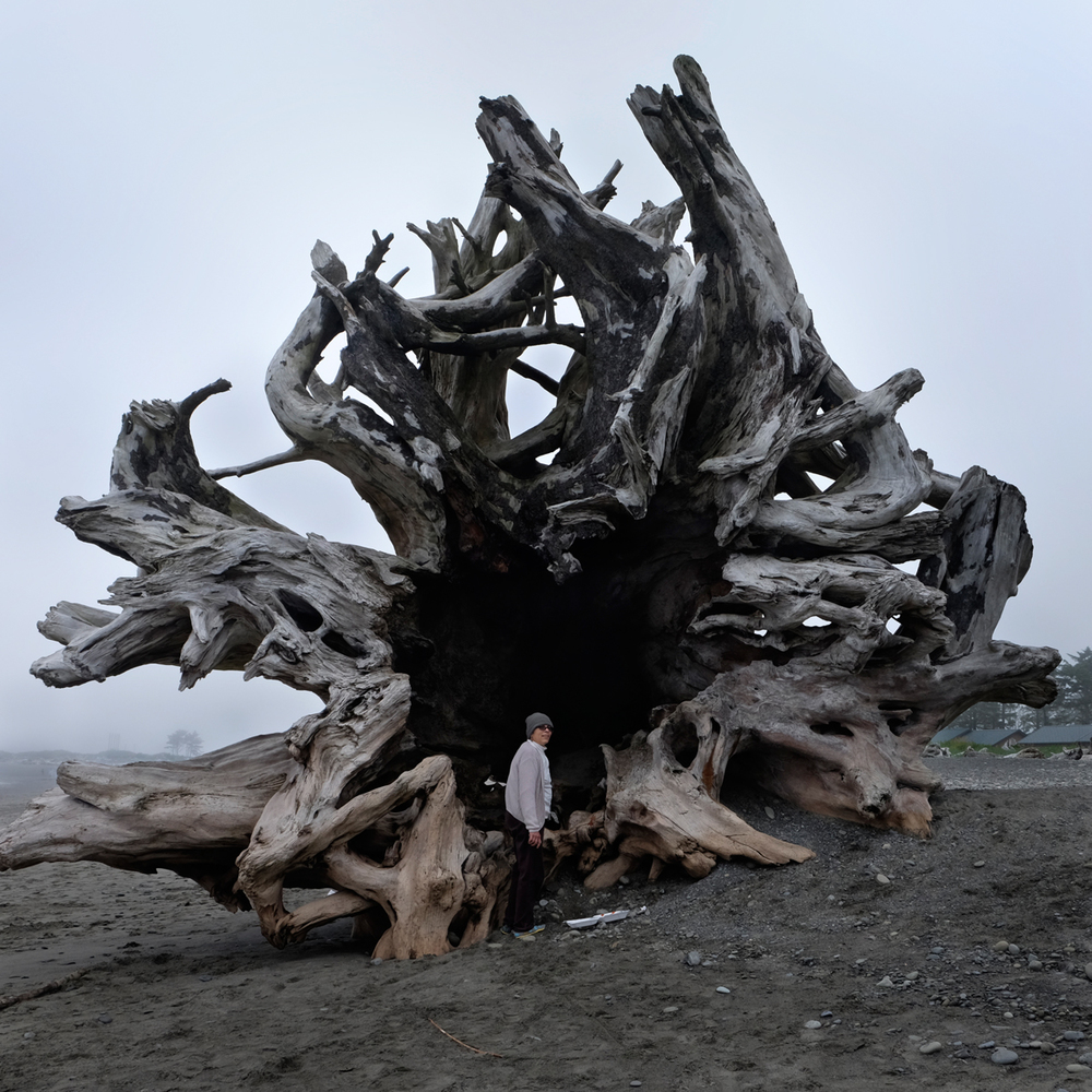 Leslie on the Beach at La Push, Washington, 2014  click image to enlarge