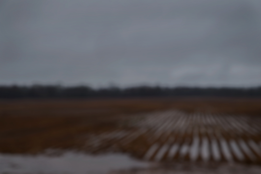 Flooded Fields, Natchitoches, LA 2015