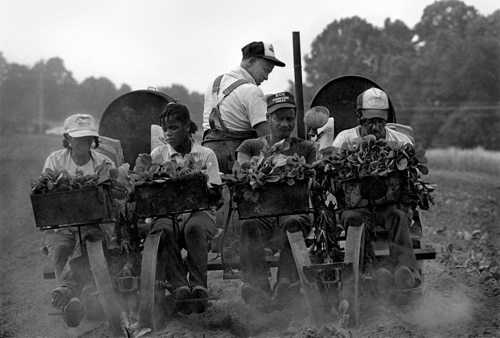 Jim Smyre and Family Planting Tobacco, Harmony, NC, 1987