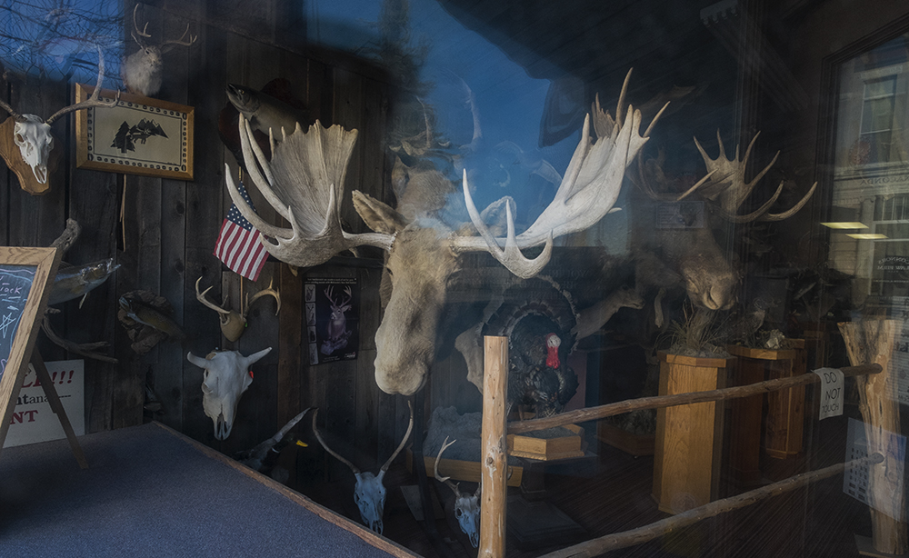 Capp's Taxidermy, Anaconda, Montana 2015