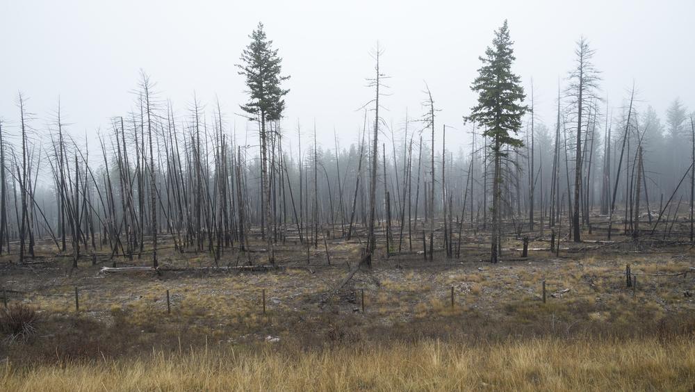 Burned Forest, north of Missoula, Montana 2015