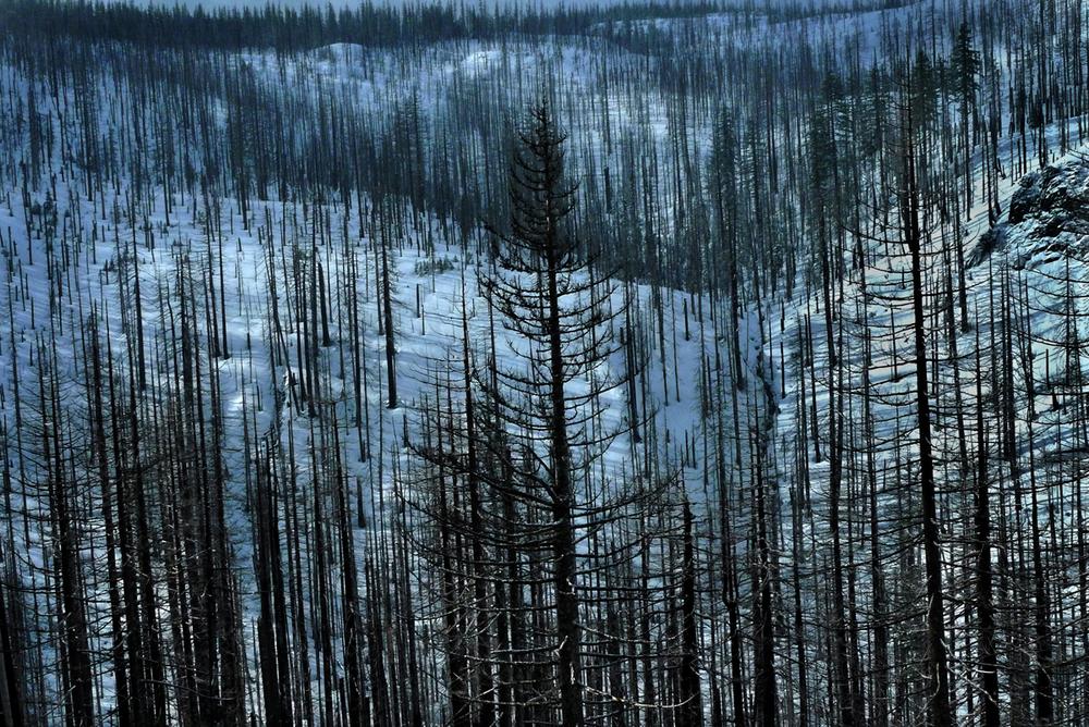 Fire Damage, Cascade Mountains, East of Sweet Home, Oregon 2012