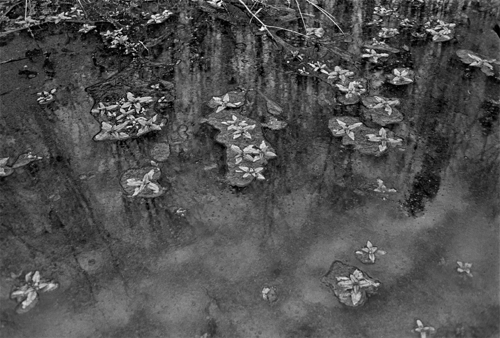 Water Plants, Sams Gap, Madison County, NC 1997 - from The New Road: I-26 and the Footprints of Progress in Appalachia