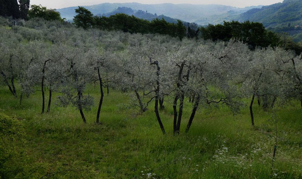 Fattoria di Poggiopiano, Girone, Italy 2017