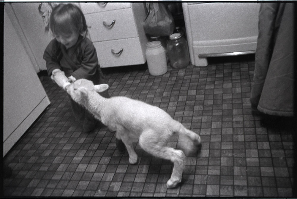 Benny feeding Jim and Libby's Lamb in our kitchen, Big Pine, Madison County, NC 1982