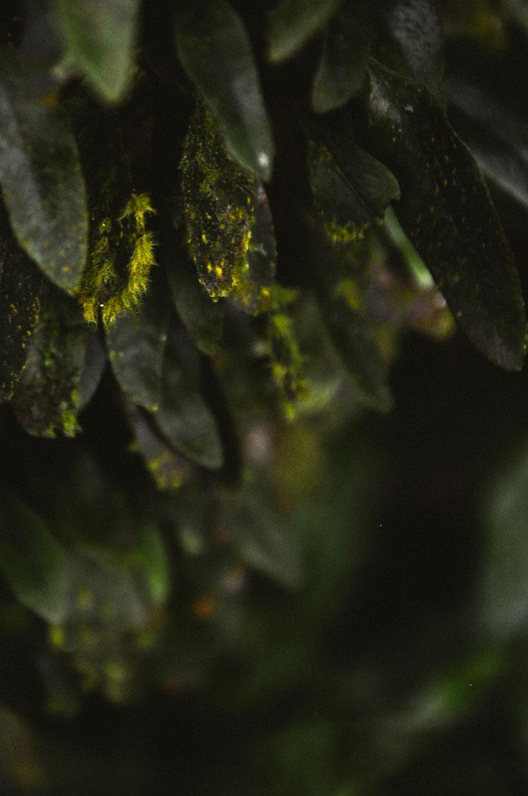 leafs-hojas.jpg