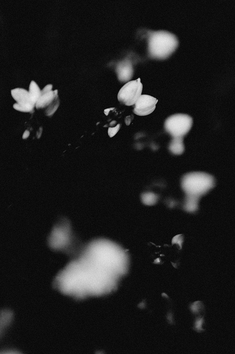 musaindulge-flowers.jpg