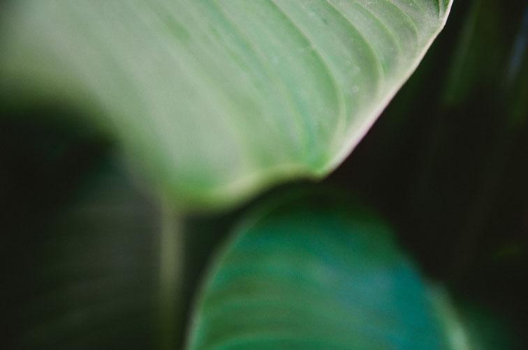 musaindulge-greenandblue-leaf.jpg