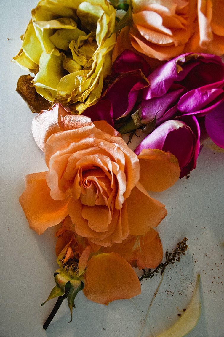 roses-sheilaburgos.jpg
