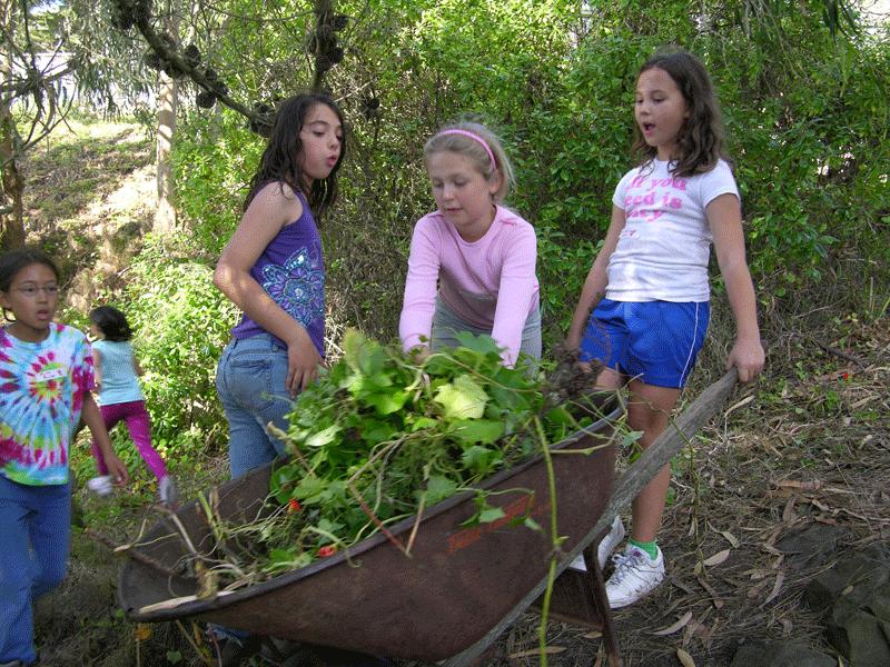 kids-weed-barrow.png