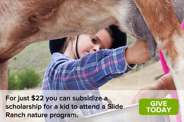 Homepage-Images_Kid-Milking-Goat.jpg