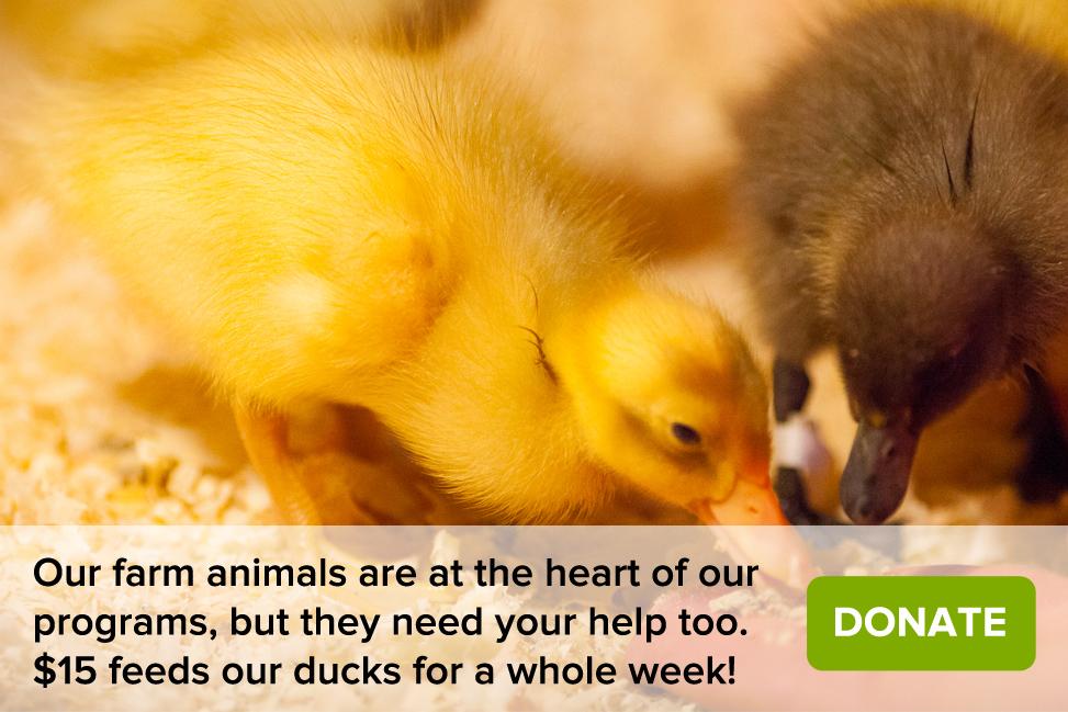 Homepage Images_Ducks-Donate.jpg