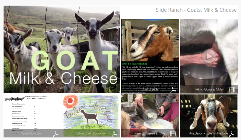Goats, Milk and Cheese - Learn about our goats, how to milk them, and make cheese.