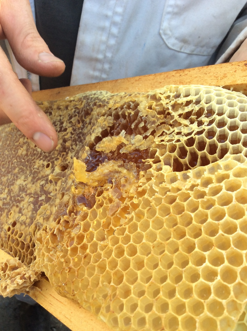 Beekeeping on the Coast with Mike Turner of Marin Coastal Bee Company