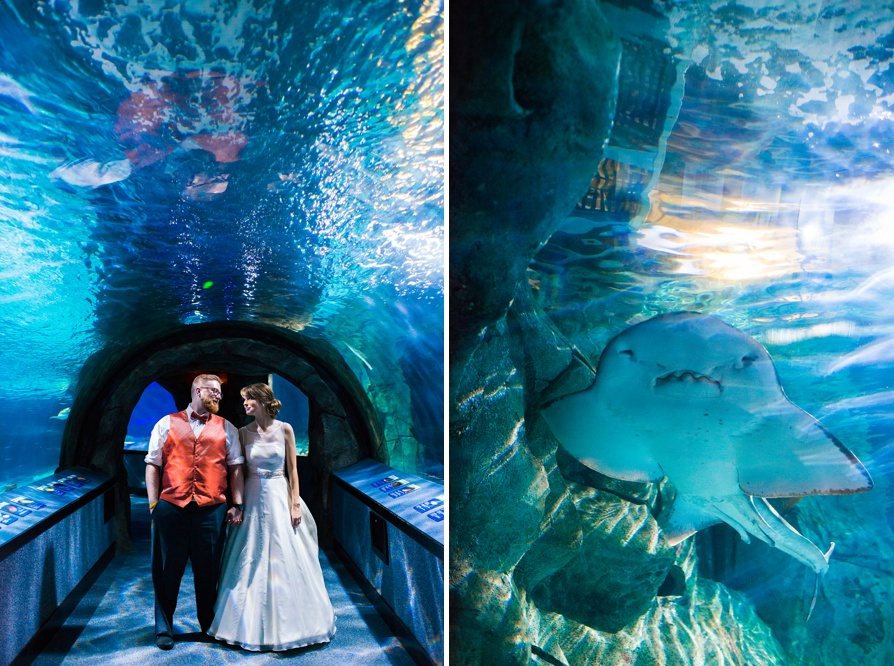 Newport Aquarium Wedding, Newport Aquarium, Kentucky wedding photographer, cincinnati wedding photographer, destination wedding photographer