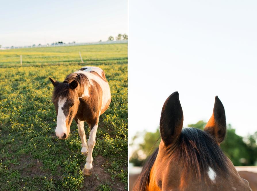 Horse Track Engagement, Lexington Engagement