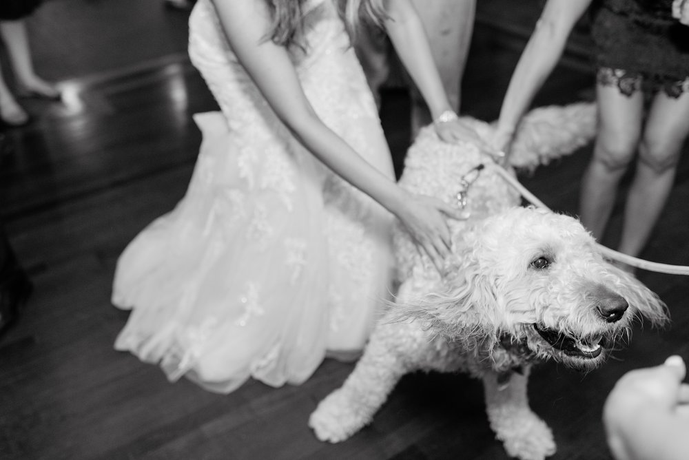 dancing dog wedding reception.jpg