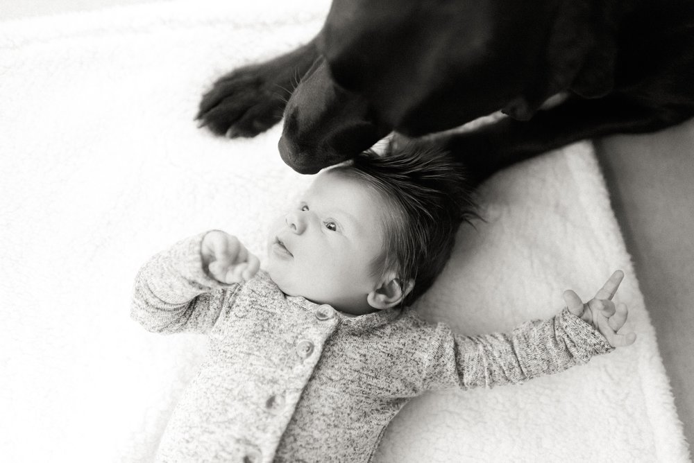 newborn and black lab dog