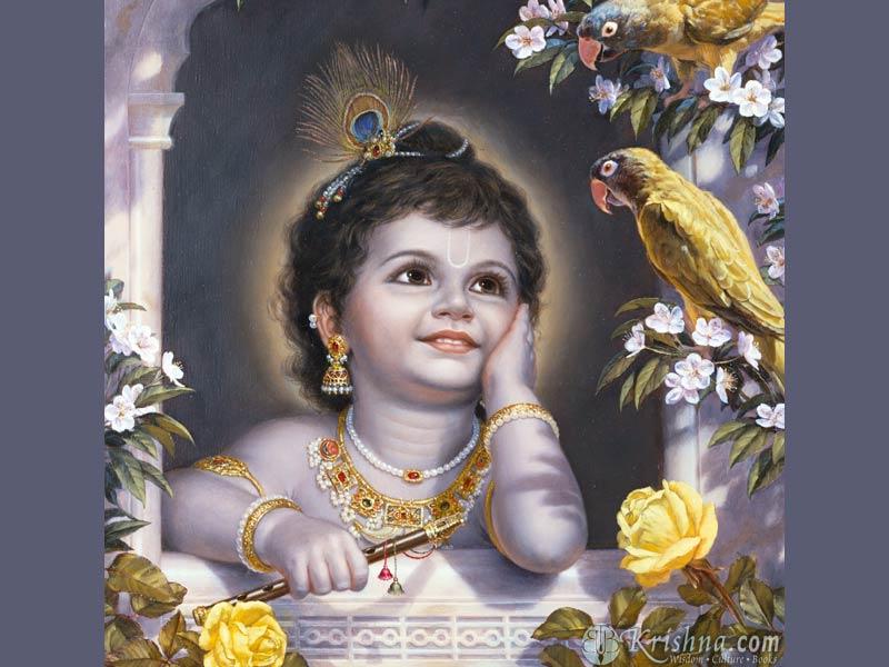 Krishna Parrot.jpg