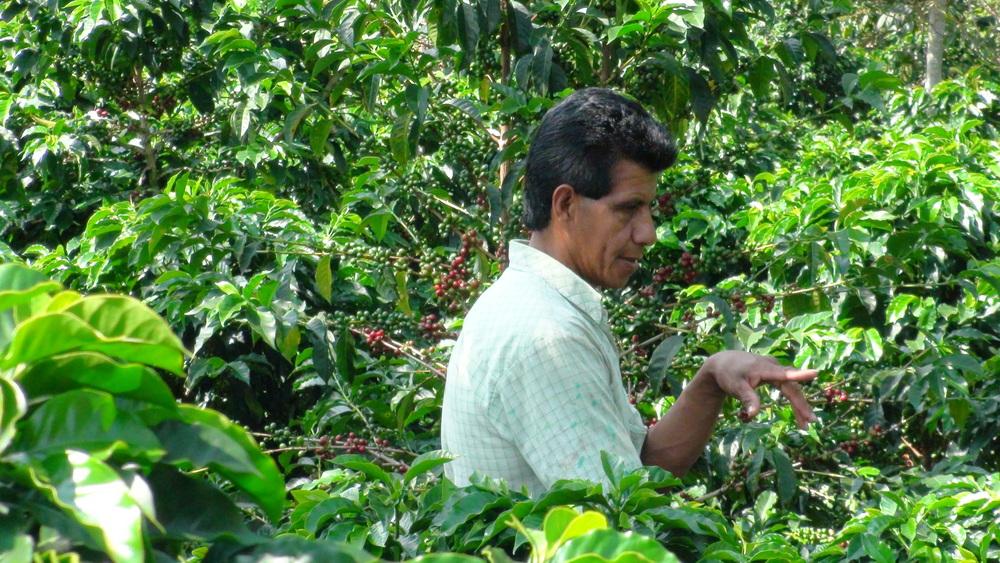 来週にでも発売開始します。 今年で3年目になりますかねぇ、:コロンビアのブエナビスタ農園のコーヒーです。