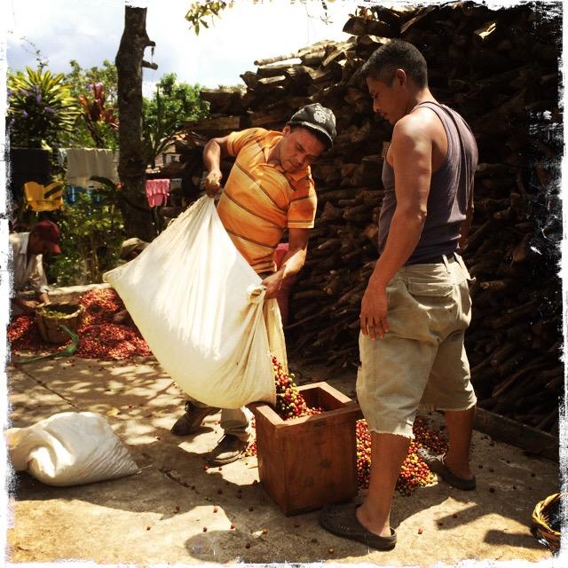 産直しているからには、生産国の労働者にも役に立てるよう、農園主の方々とも意見交流をし、双方にとってメリットが何年も続くように努力いたします。