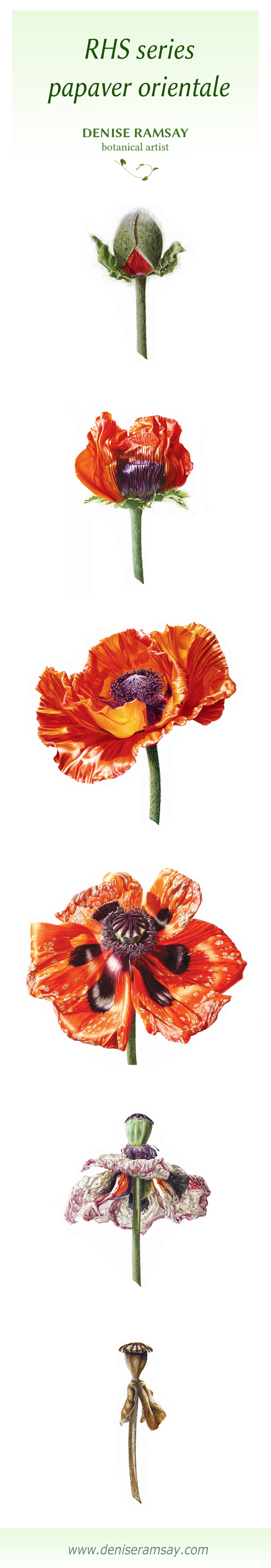 full series poppy vertical.jpg
