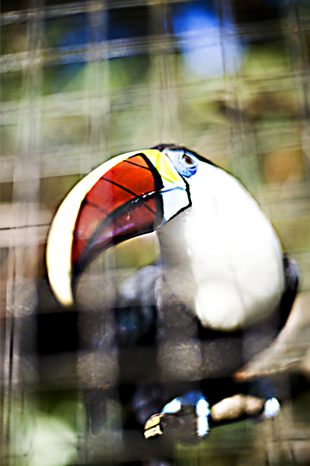 Toucan at the Emperoro Valley Zoo.jpg