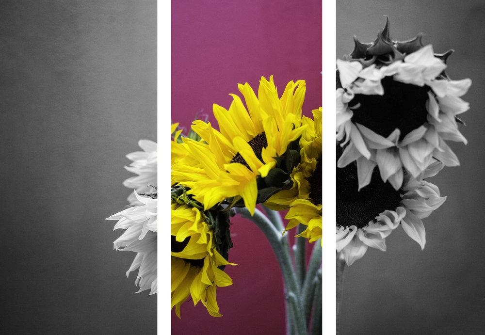 Sunflower Triptych.jpg