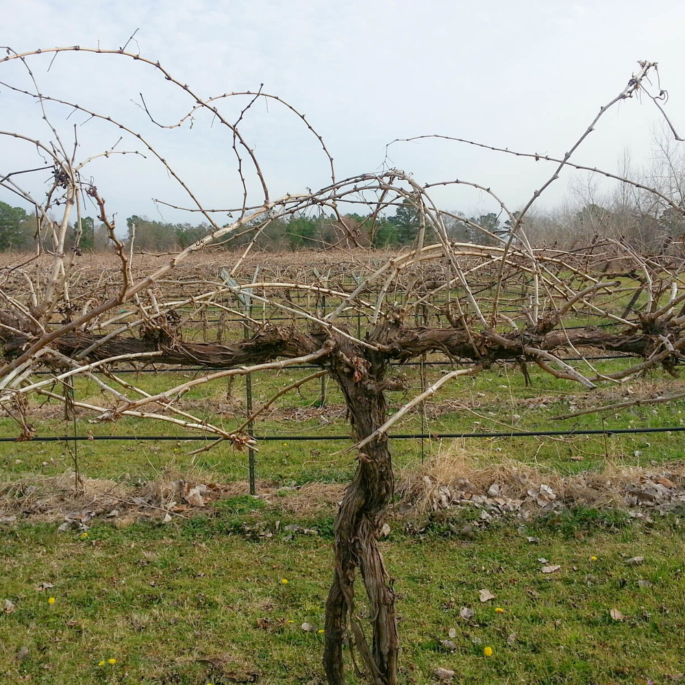Before pruning